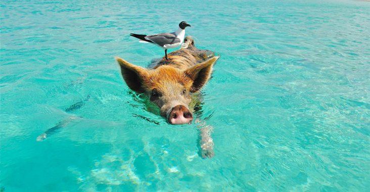 Bahamas strande
